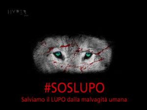 hypergraph-soslupo-italia